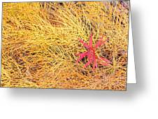 Fall Colored Horsetail And Fireweed  Greeting Card