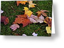 Fall Colored Leaves Greeting Card