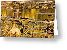 Fall Colored Pond Greeting Card