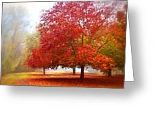 Fall Colored Trees Greeting Card