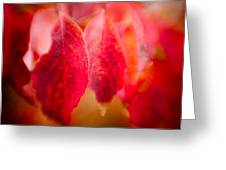 Fall Colors 0666 Greeting Card