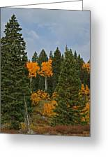 Fall Colors 2 Greeting Card Greeting Card