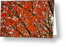 Fall Colors 2014-10 Greeting Card