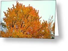 Fall Colors 2014-11 Greeting Card