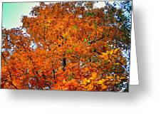Fall Colors 2014 - 14 Greeting Card