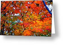 Fall Colors 2014-4 Greeting Card