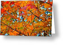 Fall Colors 2014-5 Greeting Card