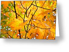 Fall Colors 2014-7 Greeting Card