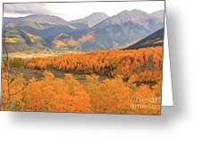 Fall Colors 3 Greeting Card