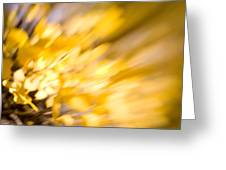 Fall Colors 6730 Greeting Card