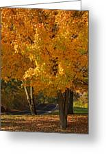 Fall Colors Greeting Card by Adam Romanowicz