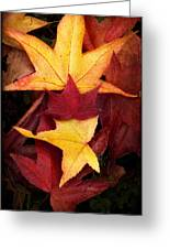 Fall Colors Greeting Card by Bobbi Feasel