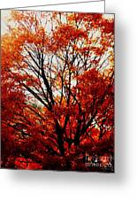 Fall Colors Cape May Nj Greeting Card
