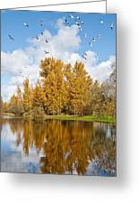 Fall Colors Clouds And Western Gulls Reflected In A Pond Greeting Card