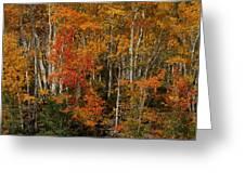 Fall Colors Greeting Card Greeting Card
