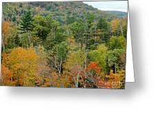 Fall Colors II Greeting Card
