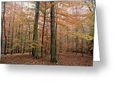Fall Colors In Catoctin Mt. Park Greeting Card