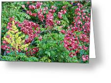 Fall Colors In Florida Greeting Card