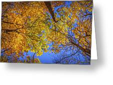 Fall Colors In The Sky  Greeting Card