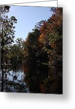 Fall Colors In The Swamp Greeting Card