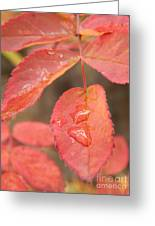 Fall Colors Greeting Card by Jennifer Kimberly