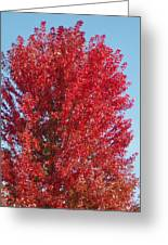 Fall Colors Greeting Card