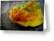 Fall Colors On A Downed Aspen Leaf Greeting Card