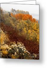 Fall Colors On June Lake Loop Greeting Card