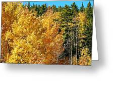 Fall Colors On The Colorado Aspen Trees Greeting Card