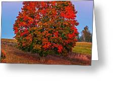 Fall Colors Over A Big Tree In Warmia In Poland During Twilight Hour Greeting Card
