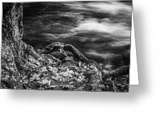 Fall Colors Stream Great Smoky Mountains Painted Bw Greeting Card