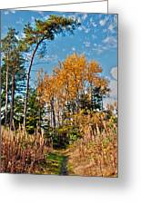 Fall Colours Greeting Card