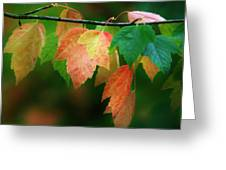 Fall Comes Greeting Card