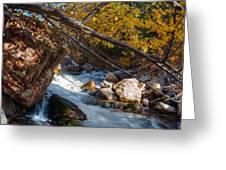 Fall Cottonwood I Greeting Card