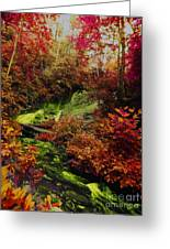 Fall Creek Fastasy Greeting Card