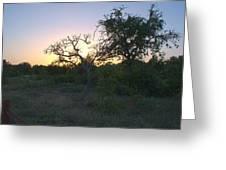 Cedar Park Texas Fall Creek Sunset Greeting Card