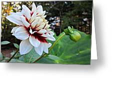 Fall Dahlia Greeting Card