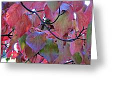 Fall Dogwood Leaf Colors 2 Greeting Card