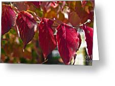 Fall Dogwood Leaves Greeting Card