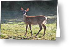 Fall Fawn Greeting Card