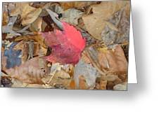 Fall Fell Greeting Card by Glenn Calloway