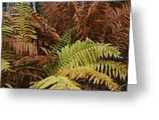 Fall Ferns Acadia National Park Img 6355 Greeting Card