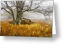 Fall Ferns And Fog Greeting Card