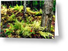 Fall Ferns Of Cannan Valley West Virginia Greeting Card by Dan Carmichael