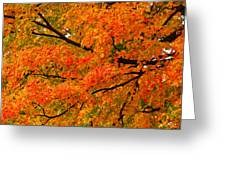 Fall Fiesta Greeting Card