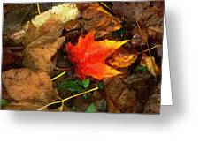Fall Flames Out Greeting Card