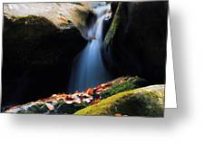 Fall Flow Greeting Card