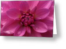 Fall Flower Greeting Card