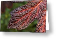 Fall Foliage 4 Greeting Card