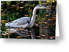 Fall Foliage And Fowl Greeting Card